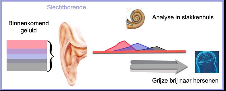 analyse geluid in slakkenhuis slechthorende brei